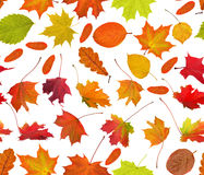 Bright autumn leaves seamless background Stock Photos
