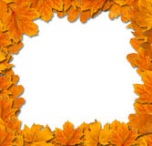 Bright autumn leaves Stock Photography
