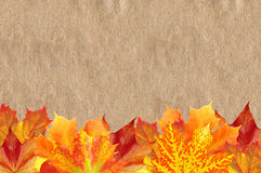 Bright Autumn Maple Leaves over Old Paper Texture Royalty Free Stock Photos