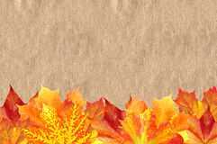 Bright Autumn Maple Leaves over Old Paper Texture Royalty Free Stock Photo