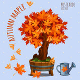 Bright autumn maple tree, vector card Stock Photos