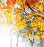 Bright Autumn morning Stock Photos