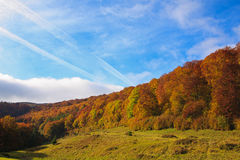 Bright autumn morning in the beech forest. Royalty Free Stock Photography