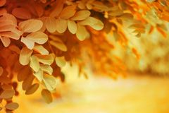 Bright autumn nature background stock photography