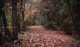 Bright Autumn Path stock photography