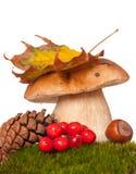 Bright autumn set Royalty Free Stock Photos