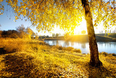 Bright autumn at sunrise Stock Image