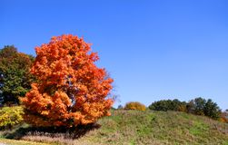 Bright autumn tree Stock Photography