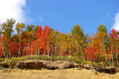 The Bright autumn tree on breakaway. Stock Photo