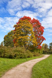 Bright autumn tree in park. Stock Photo