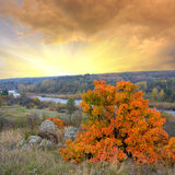 Bright autumn tree on red sunset background Stock Images