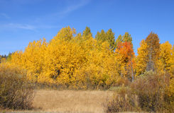 Bright autumn trees Royalty Free Stock Images