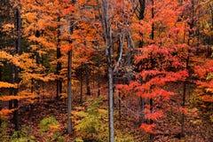 Bright autumn trees Stock Photography