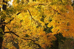 Bright autumn trees in Luxembourg city. Garden in sunny day Stock Photo