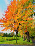 Bright autumn trees in a park Stock Photo
