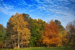 Bright autumn wood Royalty Free Stock Images