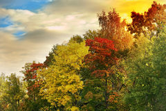 The bright autumn wood Stock Image