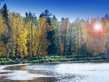The bright autumn wood is reflected in the lake Royalty Free Stock Photos