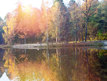 The bright autumn wood is reflected in the lake Royalty Free Stock Images