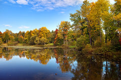 Bright autumn wood is reflected in the lake Stock Images