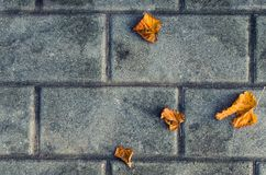 Bright autumn yellow leaves on gray contrasting bricks. royalty free stock photography