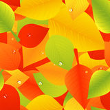Bright autumnal leaf background with dew Royalty Free Stock Photography