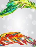 Bright background. Bright  background with multicolor feathers Stock Image
