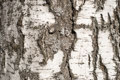 Birch bark for background royalty free stock photography