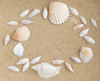 Bright Background with Different Sea Shells Stock Photos