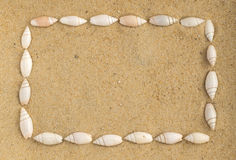 Bright Background with Different Sea Shells Royalty Free Stock Photo