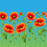 Bright background with flowers curb poppy packaging Royalty Free Stock Photo