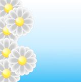 Bright background with flowers for a design Royalty Free Stock Photos
