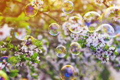 Bright  background with flying shiny soap bubbles over the sprin Stock Photo