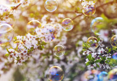 bright background with flying shiny soap bubbles over th Royalty Free Stock Photo