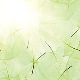 Bright background from green leaves Royalty Free Stock Image