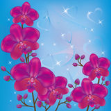 Bright background orchids. Bright background with purple orchids and decorations Royalty Free Stock Photography