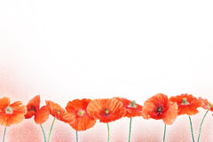 Bright background with red poppy flowers Stock Image