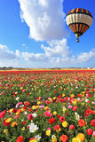 Bright balloon flies over field  of buttercups. Royalty Free Stock Photos
