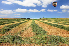 Bright balloon over a field of wheat Stock Image
