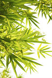 Bright Bamboo background Stock Image