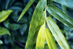 Bright bamboo leaf on green background. Bamboo leaf moody style toned photo for meditation wallpaper Stock Photo
