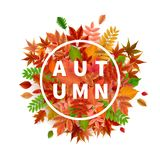 Bright banner for autumn sale Royalty Free Stock Photos