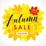 Bright banner for autumn sale with text 50% off just now in frame from yellow maple leaves. Fall sale background, special offer for promotion poster or flyer Stock Illustration