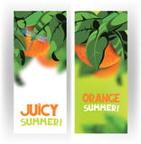 Bright banners with oranges on the tree with green leaves on the white background Stock Images