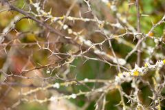 Bright barberry in the fall. Ornamental shrubs and berries royalty free stock photos