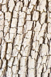 Bright bark texture Royalty Free Stock Images