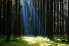 Bright beam onto forest glade Stock Images