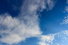 Bright and beatiful blue sky with clouds and bird on a sunny day.  stock photography