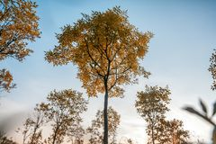 Bright beautiful autumn landscape, yellow leaves and blue sky, n royalty free stock photography