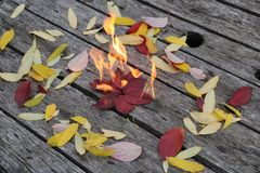 Bright beautiful autumn leaves burn on a wooden background Stock Photos